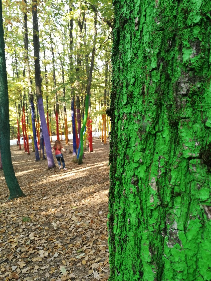 Vopseaua din Padurea Colorata e tree-friendly